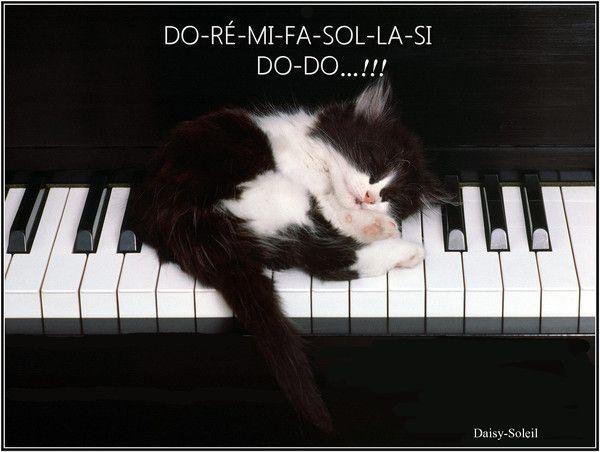 """Résultat de recherche d'images pour """"image chaton bonne nuit"""""""